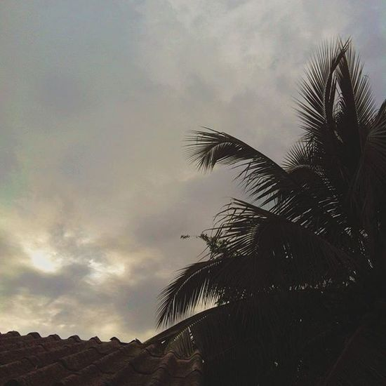 Günaydın   Morning ⛅️🌴 Morning Myfriendshouse Countryside Sky Tree Vacation Chilling Summer Chiangrai Thailand Tayland