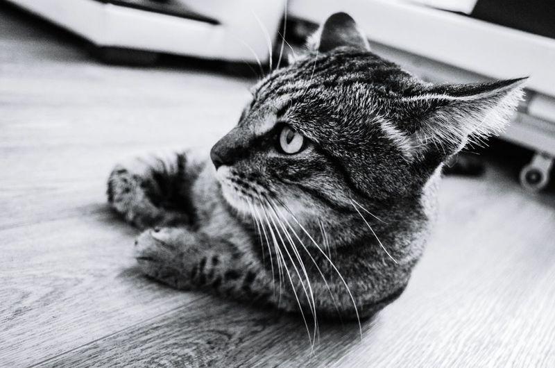 кот чернобелое чернобелоенастроение