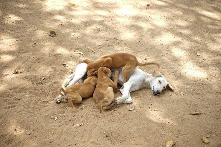 Mother dog feeding its puppies @thephotosociety TPSAffinity Mother Feeding  Puppy Puppies Dog Dogfeeding Dogfeed Feedingdog Feedingdogs Feed  Motherlove Love Animallovers Animal Animals Animallove Cutepuppies Puppyfun Sonya7II Sonyalpha7ii Sonya7m2