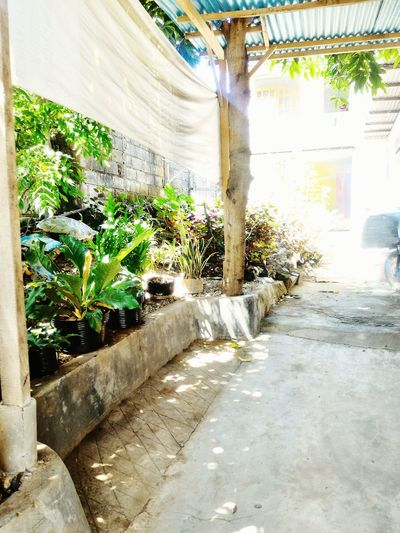 Almost garden but it doesn't. Beauty In Nature Week Of Eyeem RSSOesapa The Week On EyeEem Good Time INDONESIA