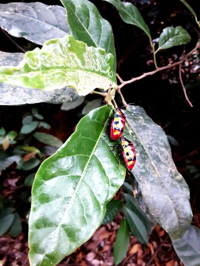 Ladybug Animal Wildlife Nature Outdoors Close-up No People Insect Leaf Animals In The Wild Animal Themes One Animal Day Love