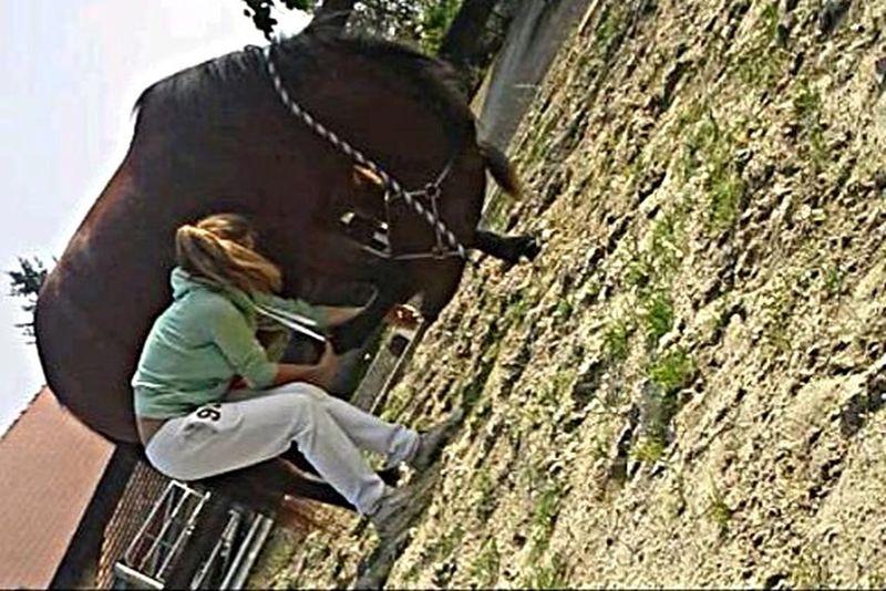 Working Horses ♥️ dreamy ♥️