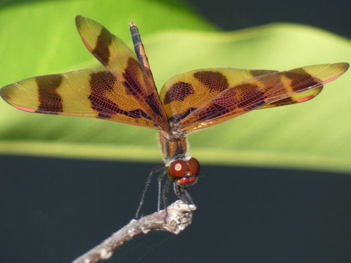 One Animal Insect Invertebrate Animal Themes Animals In The Wild Animal Close-up Animal Wildlife Nature Butterfly - Insect