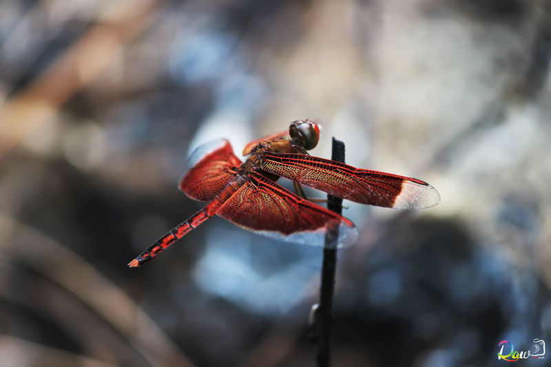 Insect Photography Macro Canon
