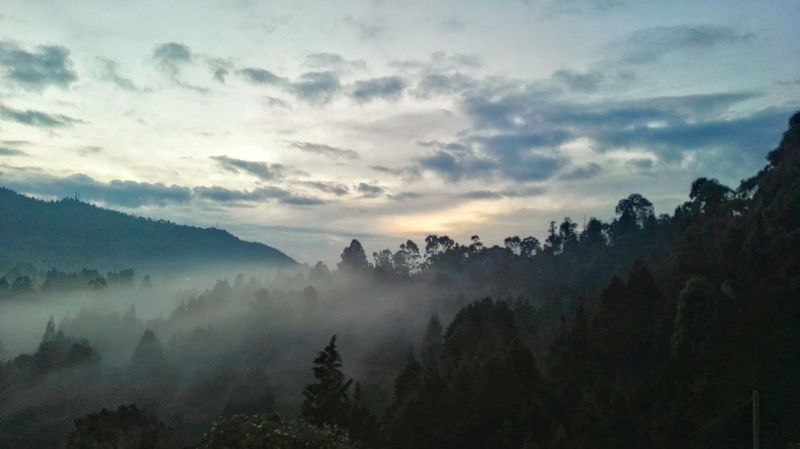 Forest Pinaceae Pine Woodland Nature Pine Tree Landscape Mountain Blue Tree Morning Beauty In Nature Fog Sky Silhouette Cloud - Sky Outdoors No People Sunset Travel Social Issues