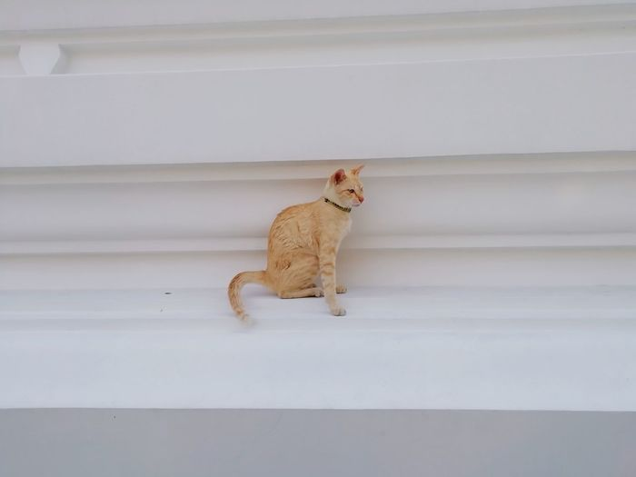 Cat sitting on staircase