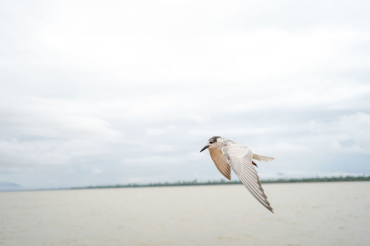 Seagull flying over a land