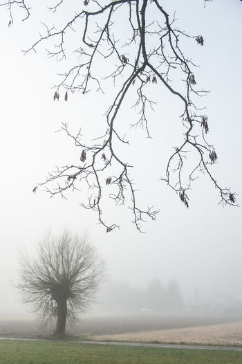 Atmosphere Bare Tree Beauty In Nature Branch Day Distant Environment Field Foggy Landscape Lone Majestic Nature No People Non-urban Scene Outdoors Remote Rural Scene Scenics Sky Solitude Southern Germany Tranquil Scene Tranquility Tree