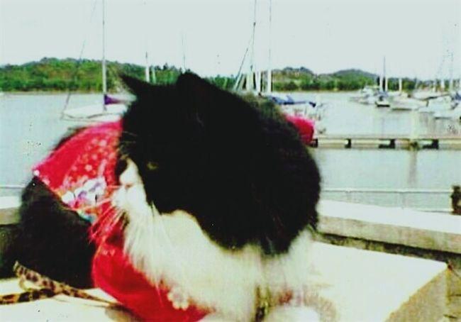 Ponette.. Love Peekaboo Catpeople Relaxing