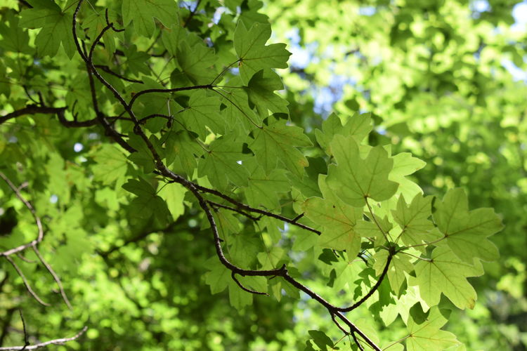 Austria Green Green Color Muggendorf Nature Niederösterreich Beauty Beauty In Nature Beauty In Nature Close-up Day Dayoff Europe Growth Leaf Motherearth Mothernature Myrafällle Nature Nature_collection No People Outdoors Plant Summer Österreich