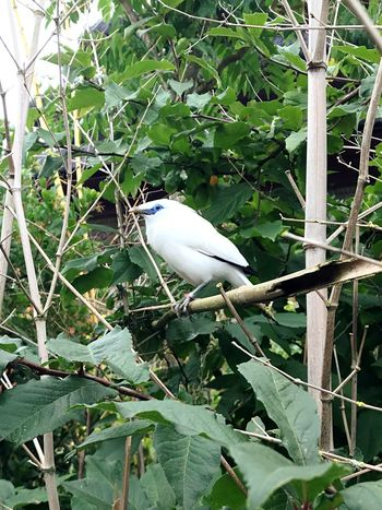 Vertebrate Animal Animal Themes Bird Animal Wildlife Animals In The Wild Plant Perching One Animal Tree Branch Leaf Growth Plant Part Nature Green Color Day No People Beauty In Nature Outdoors