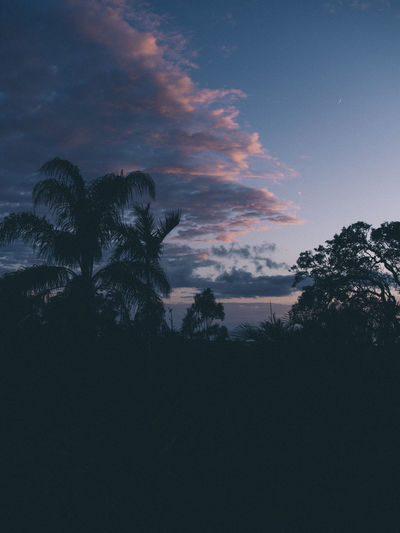 Sky Tree Silhouette Plant Sunset Beauty In Nature Cloud - Sky Scenics - Nature Growth Tranquil Scene Tranquility Tropical Climate Palm Tree Nature No People Low Angle View Outdoors Idyllic Non-urban Scene Dusk Coconut Palm Tree Tropical Tree Australia