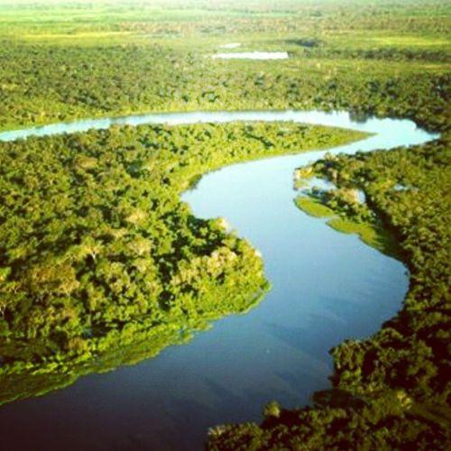 RioCuiabá PantanalMatoGrossense PantanalMt Pantanal Matogrosso MatoGrossoéLindo VejaMatoGrosso CentroOeste TurismoemMatoGrosso Bresil  Brasil Brazil Southamerica World VisitBrazil IloveBrazil Nature Natureza Florestas Verde Preserve Naodesmate Brasilverde Biodiversidade Ríos