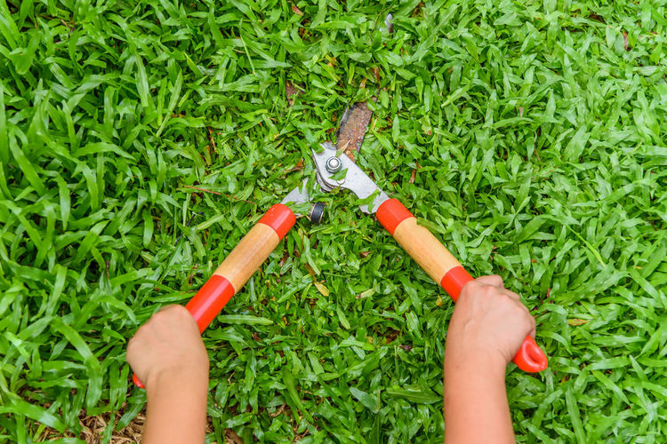 Cropped hands cutting grass with hedge clippers