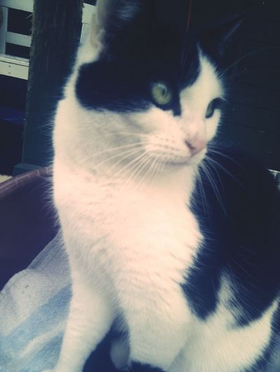 My Old Cat.. Miss You </3