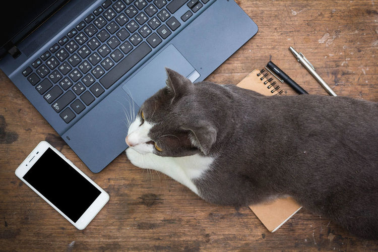 Flat lay style with laptop,smartphone,book,pen and cat on wood background Business Desk Office Wood Work Animal Cat Communication Computer Connection Cute Keyboard Laptop Lifestyles Pen Portable Information Device Smart Phone Table Technology Wooden