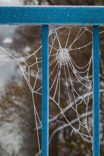 Close-up of spider web on metal fence