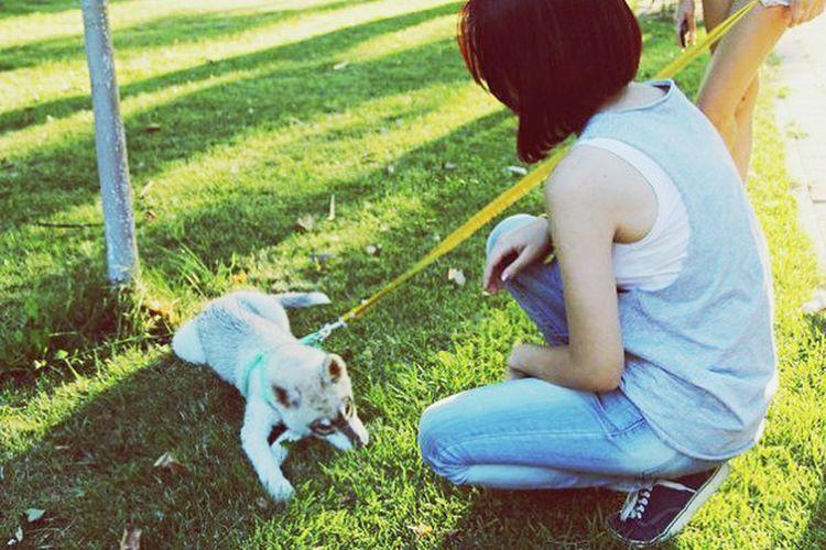 😄🎆Summer ☀ Friends ❤ Litle Dog доброта животные яркое лето прекрасные мгновения ⛵️