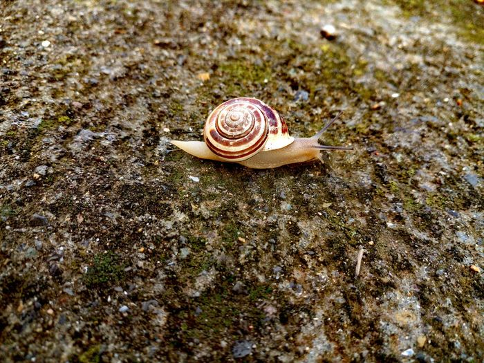 High Angle View Of Snail On Field