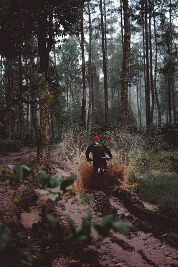 Rear view of person riding trees in forest