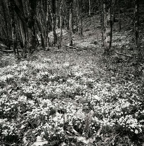 Blackandwhitephotography Nature Beauty In Nature Landscape Photography Snowdrop Valley