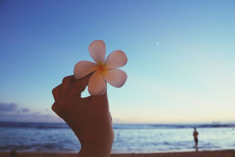 Cropped hand holding flower at beach against sky