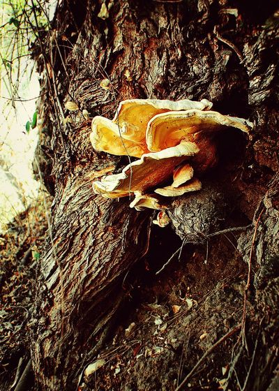 Fungus Tree Highland Park Mushrooms Fungi Urban Nature