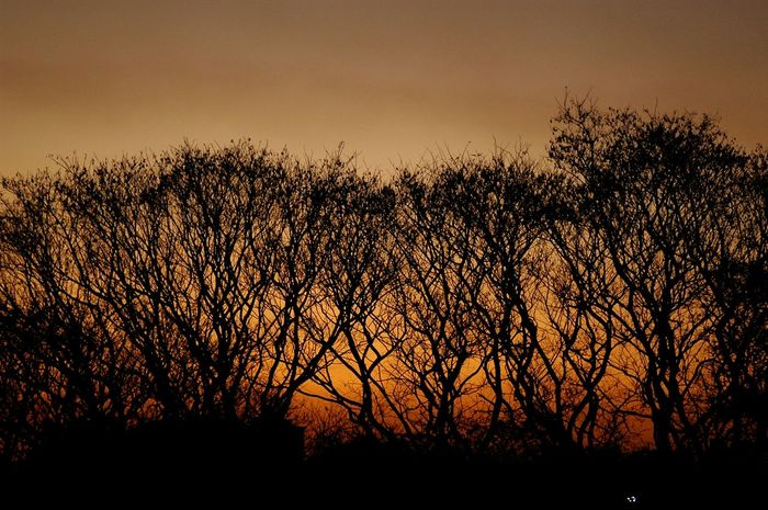 Trees Sunset Silhouettes Peace And Quiet Tranquility