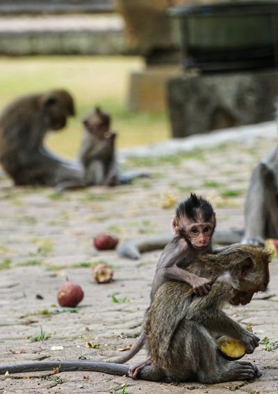 You can eat, just don't leave me alone, bro Baby Monkey Brother Brotherhood Eating Together Togetherness Monkeys Monkey Baboon Sitting Ape Primate Infant Two Animals Animal Family EyeEmNewHere