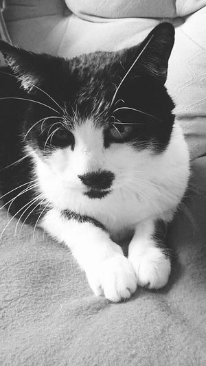 Cat Love Home Black And White Purrfect
