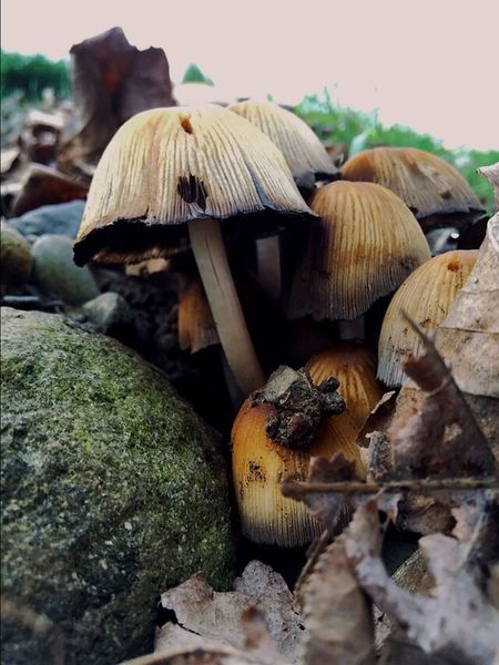 Mushrooms 🍄🍄 Mushrooms Mushroom_pictures Landscape #Nature #photography Landscape_photography Portland, OR Landscape Scenic View Landscape_Collection Nature Nature Photography Scenic Abstract Nature Up Close Nature_collection (null)Scenics Landscapes Views Atmosphere