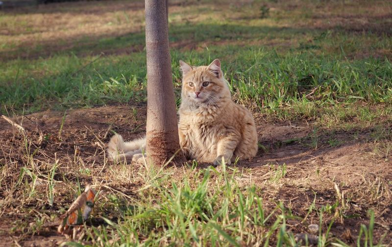 Stray fluffy ginger cat Ginger Stray Cats Stray Cat Quote Background Copy Space Stray Animal Mammal Animal Animal Themes One Animal Feline Vertebrate Field Cat Land Grass No People Animals In The Wild Nature