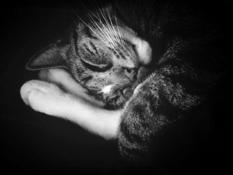 Cat Animal Sleeping Cute
