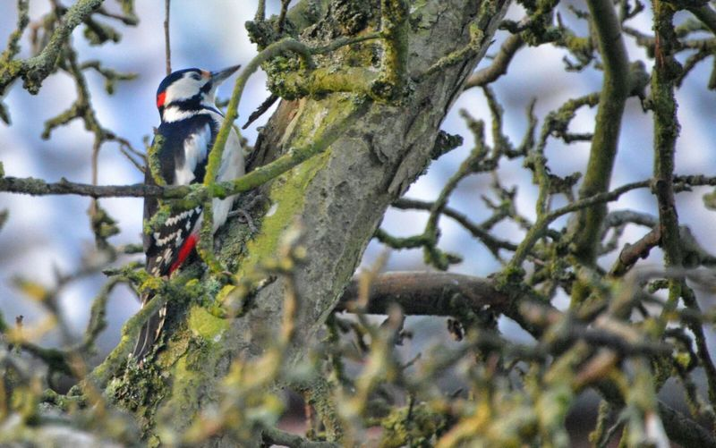 Colorful Woodpecker Tree Nature Beauty In Nature Outdoors Bird Animal Themes Day No People Eyeemphotography Year Cycle Nature Natures Diversities From My Point Of View My Year My View Silence Of Nature Animals In The Wild Animal Photography Animal Wildlife One Animal Byutiful