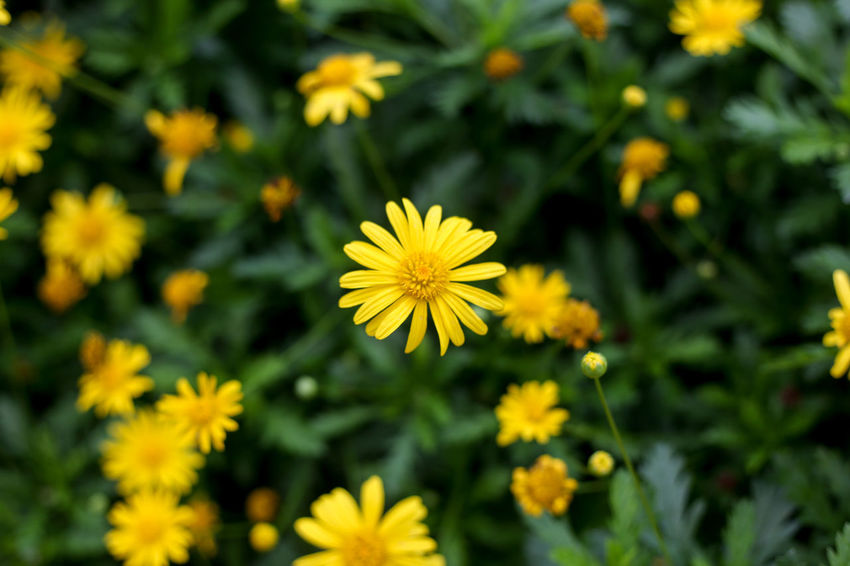 Flower Flowering Plant Freshness Fragility Plant Vulnerability  Yellow Beauty In Nature Flower Head Petal Growth Inflorescence Close-up Nature Focus On Foreground No People Day Outdoors Field Park Pollen