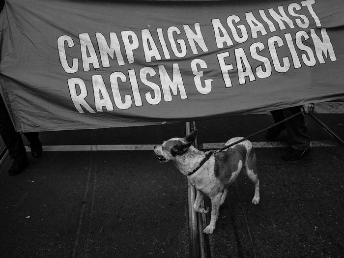 Dog On Street Against Banner During Political Rally