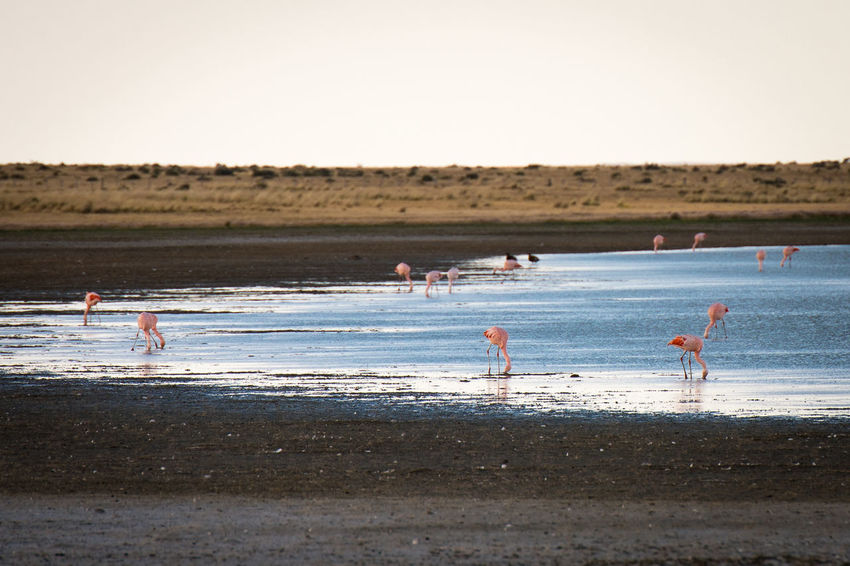 Animal Wildlife Animals In The Wild Beach Bird Day Flamingo Group Of Animals Group Of People Land Nature Outdoors People Sand Sea Sky Sport Vertebrate Water
