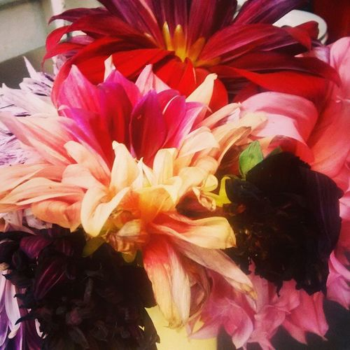 Dinner-plate Dehlias Flowerss Postweddinggoodies Ialsogothalfofacaketoo WORKHARD