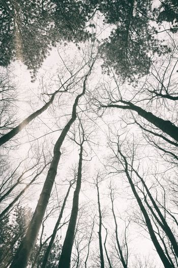 Up there again Tree Landscape Forest Nature Nature_collection Nature Photography Todays Homeoffice Vintage Outdoors