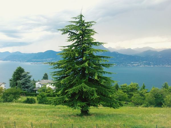 Tree Mountain Pinaceae Mountain Range Pine Tree Nature Landscape Business Water Flood Evergreen Tree Social Issues Lake Finance Backgrounds Scenics Business Finance And Industry Growth Branch Beauty In Nature Plant EyeEm Nature Lover EyeEm Beauty In Nature EyeEm Gallery