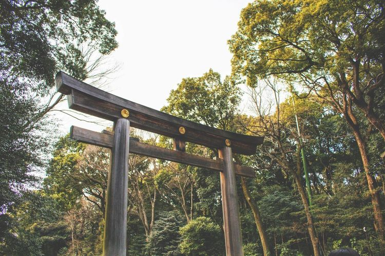 Landscape_Collection Landscape_photography Japan Landscape Japan Photography Tokyo Tokyo,Japan Meiji-Jingu Meiji Shrine Shrine Japanese Shrine Shinto Shrine Park Japanese  Japanese Culture Tree Sky Garden Park - Man Made Space
