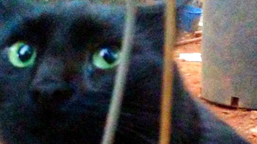 Black Cat Green Cat Eyes Hidden Forest Curious Cat Portrait Eyeball Close-up
