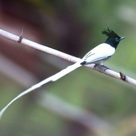 Indian Birds Animal Wildlife Nature No People One Animal Animals In The Wild Maitrayeebiswarup