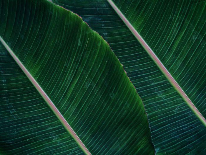 Banana leaf of life
