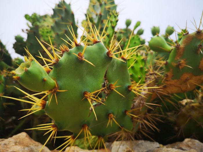 Cactus. EyeEmNewHere EyeEm Best Shots Wildnature Perfect Day Prickly Pear Cactus Cactus Spiked Thorn Close-up Plant Green Color Needle - Plant Part Arid Climate Sand Dune Barrel Cactus Atmospheric