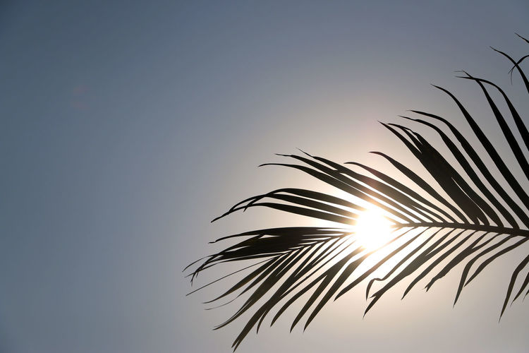 Low Angle View Of Palm Leaf Against Sky