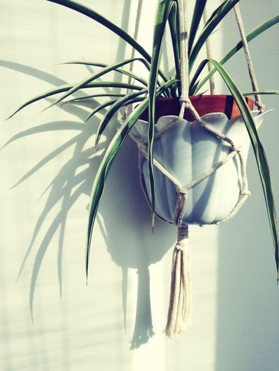 Macramehanging Plants And Flowers Balcony Shot Balcony Flower Light And Shadow Sunny Morning Flower Photography Flowers,Plants & Garden Flower Pot Green Leaves Greenplants Wall Decoration Spider Plant Plant Photography Flowe Pots Terrace Gardening Sunshine And Shadows My Balcony Garden Close-up