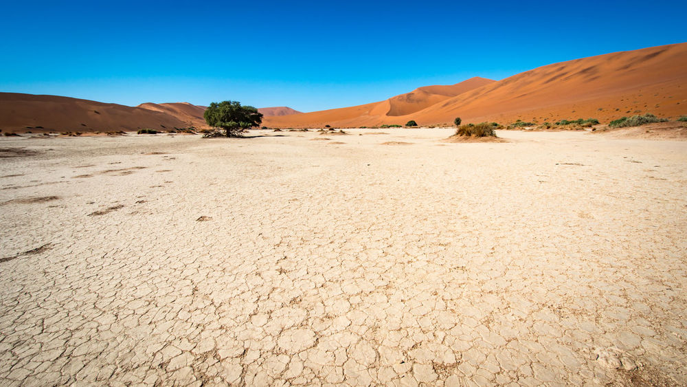 Arid Arid Landscape Desert Desolate Dry Dunes Lonely Tree Mud Mudcracks Namibia Remote Sossusvlei