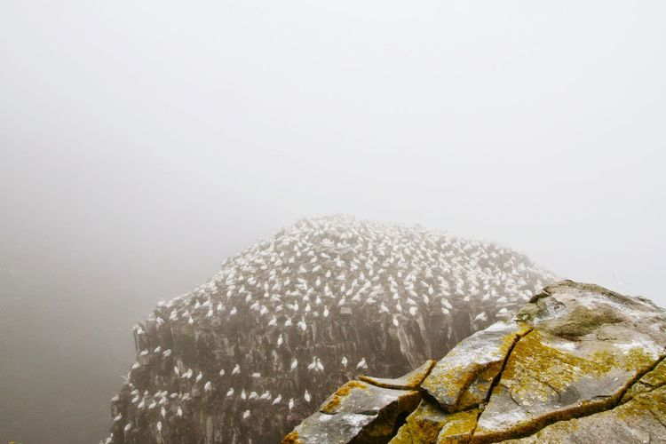 White birds perching on rock formation during foggy weather