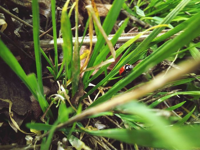 Green Greens божья коровка Ladybug Nature Growth Plant Grass Green Color Outdoors Day Animal Themes Freshness Close-up Beauty In Nature No People Field Insect One Animal Animals In The Wild Selective Focus Droplet Dragonfly Butterfly Blooming Countryside Water Drop Growing Gecko Greenery